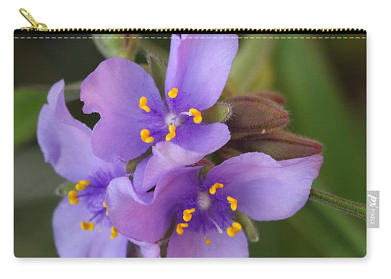 Wildflower Carry-all Pouch featuring the photograph Spiderwort by Andrew McInnes