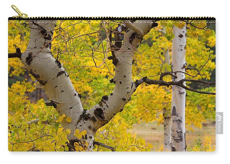 Autumn Colors Carry-all Pouch featuring the photograph Split Decision by Jim Garrison