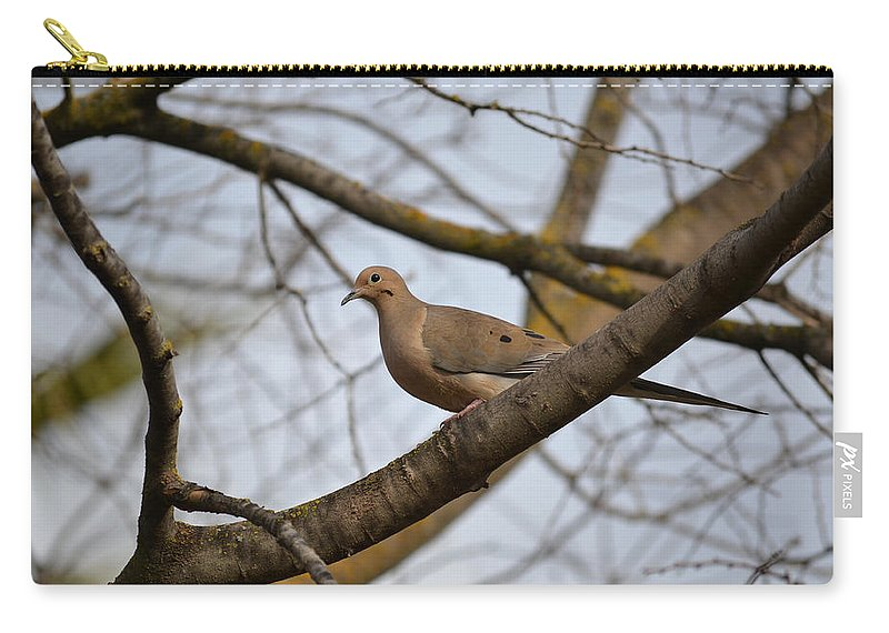 Mourning Dove Carry-all Pouch featuring the photograph Spring Is Coming by Bill Owen