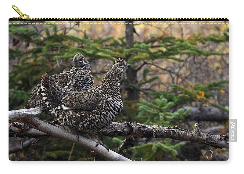 Alaska Carry-all Pouch featuring the photograph Spruce Grouse by Doug Lloyd
