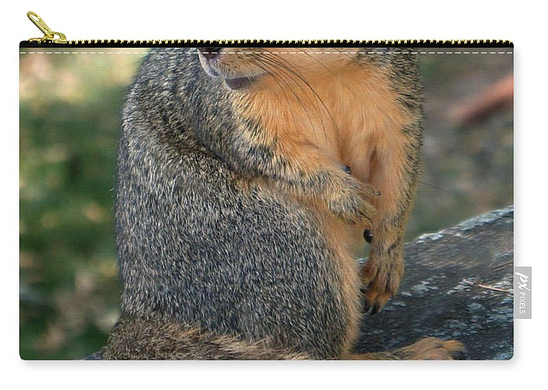 Squirrel Carry-all Pouch featuring the photograph Squirrel Looking For A Hand Out by Lori Tordsen