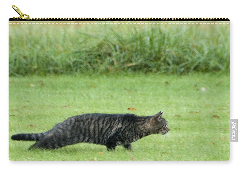 Photography Carry-all Pouch featuring the photograph Stalking by Steven Natanson