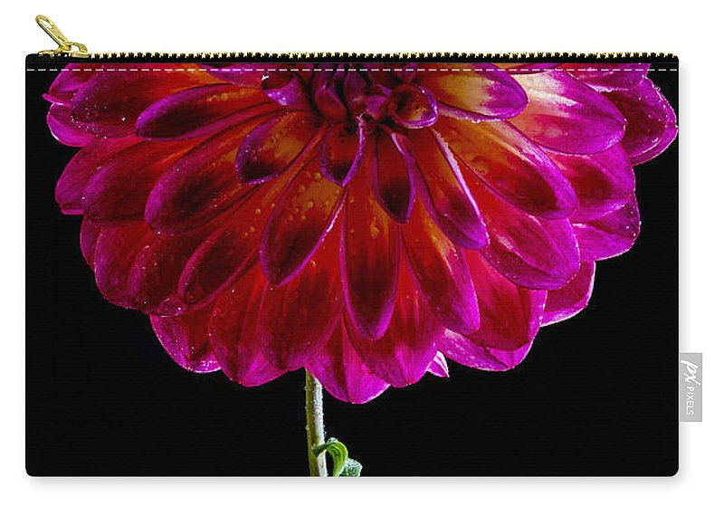 Dahlia Carry-all Pouch featuring the photograph Stand Up Dahlia by Jean Noren