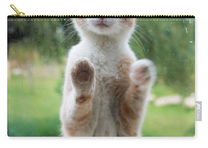 Augusta Stylianou Carry-all Pouch featuring the photograph Standing Cat by Augusta Stylianou