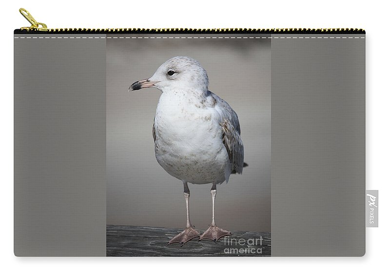 Seagull Carry-all Pouch featuring the photograph Standing Seagull by Carol Groenen