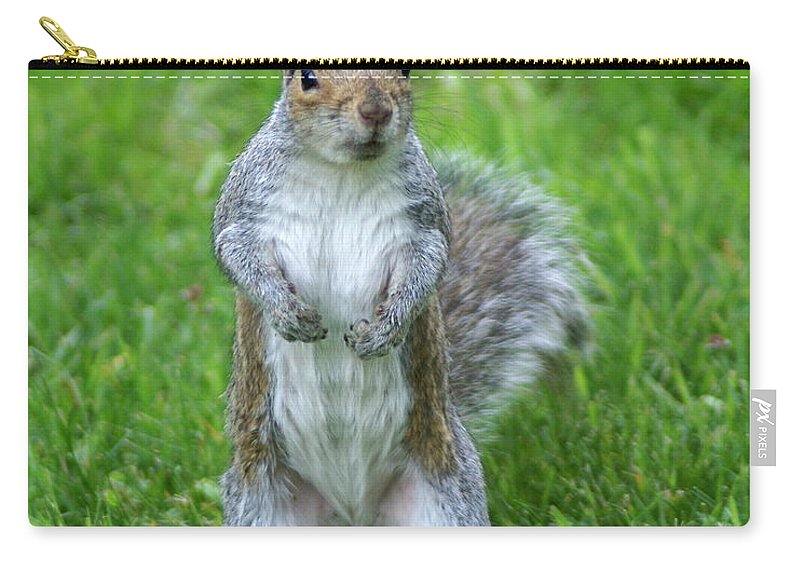 Squirrels Carry-all Pouch featuring the photograph Standing Tall by Ben Upham III