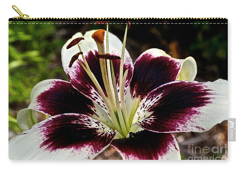 Floral Carry-all Pouch featuring the photograph Star Bright by Susan Herber