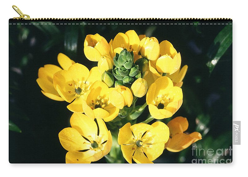 Star Of Bethlehem Carry-all Pouch featuring the photograph Star Of Bethlehem by Science Source