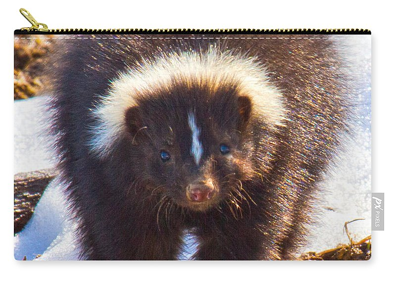 Skunk Carry-all Pouch featuring the photograph Stop Where You Are by Betsy Knapp