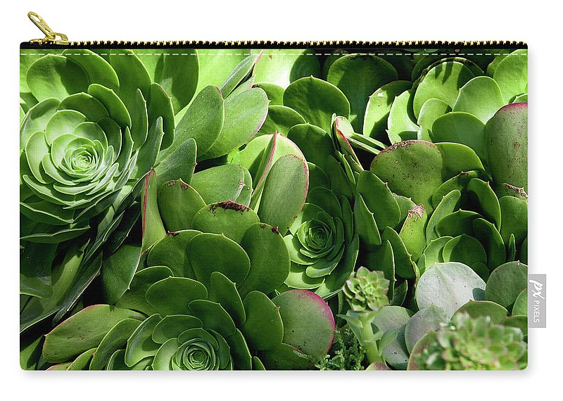 The Strand Carry-all Pouch featuring the photograph Strand Succulent by Lorraine Devon Wilke