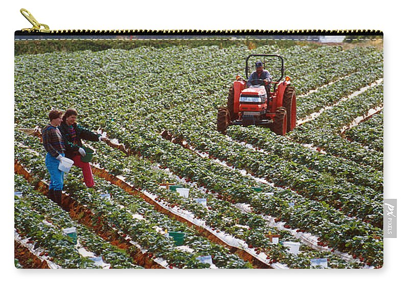 Farm Carry-all Pouch featuring the photograph Strawberry Farm by Photo Researchers