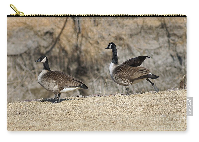 Goose Carry-all Pouch featuring the photograph Stretching The Leg by Lori Tordsen