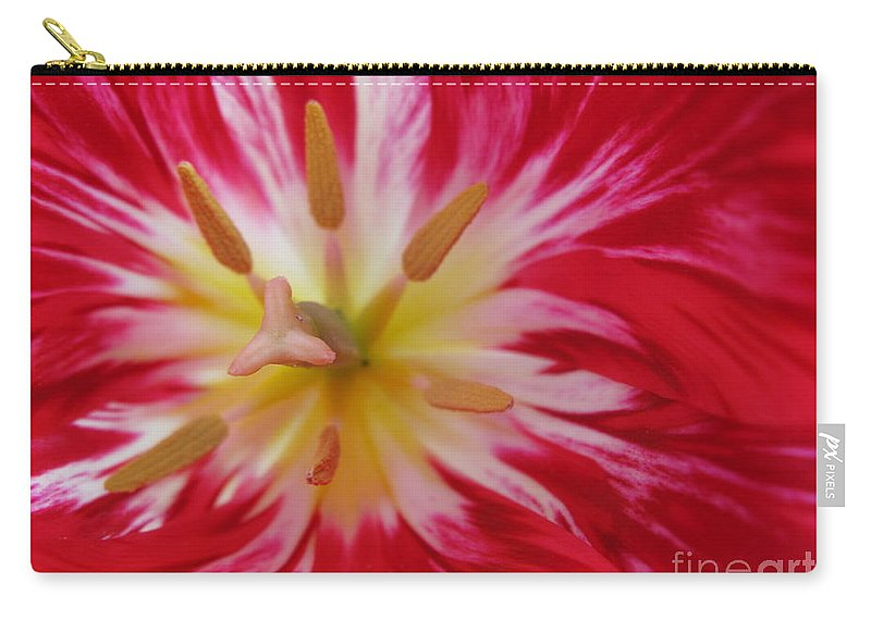 Tulip Carry-all Pouch featuring the photograph Striped Flaming Tulips. Hot Pink Rio Carnival by Ausra Huntington nee Paulauskaite