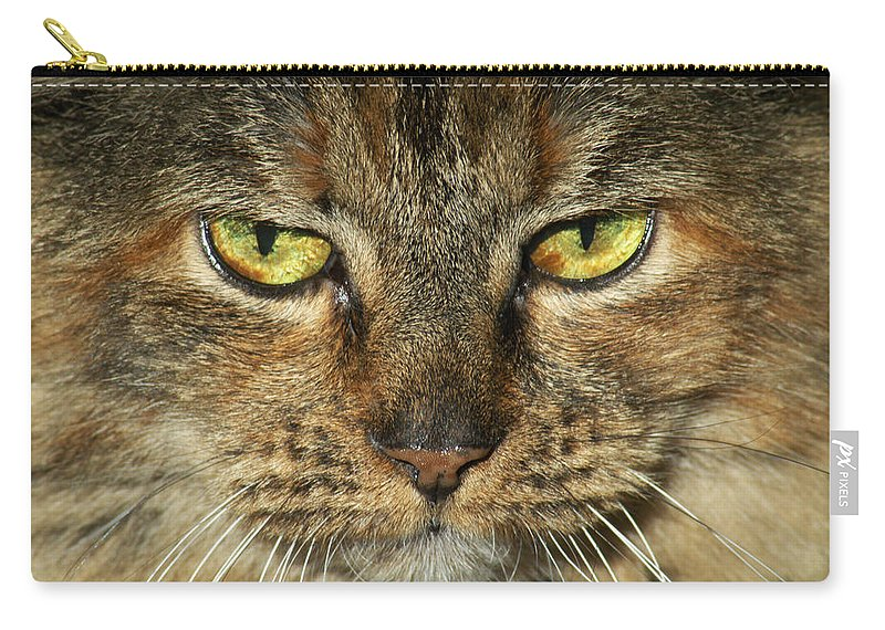 Cat Carry-all Pouch featuring the photograph Stubbs 1 by Carlene Salazar
