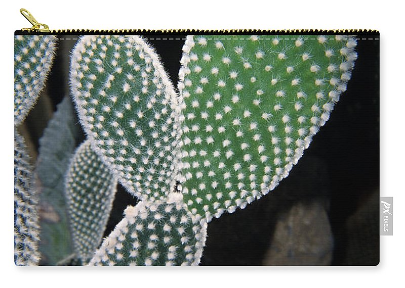 Cactus Carry-all Pouch featuring the photograph Succulants by Sharon Elliott