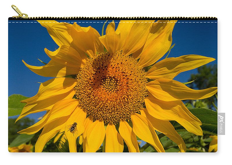 Sunflower Carry-all Pouch featuring the photograph Summer by Mircea Costina Photography