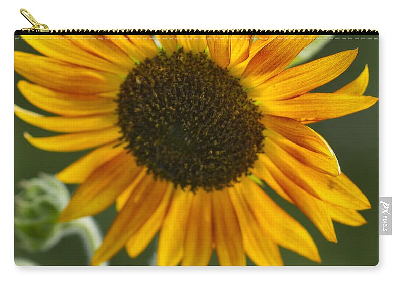 Sunflower Carry-all Pouch featuring the photograph Sunflower by Kathy Clark