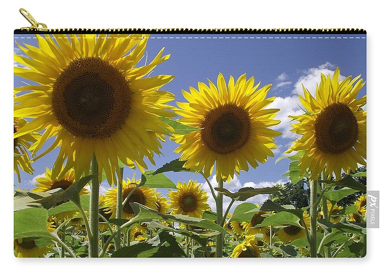 Yellow Sunflowers Carry-all Pouch featuring the photograph Sunflowers by Michelle Welles