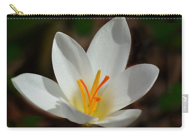 Crocus Carry-all Pouch featuring the photograph Sunlit Crocus by Sandi OReilly