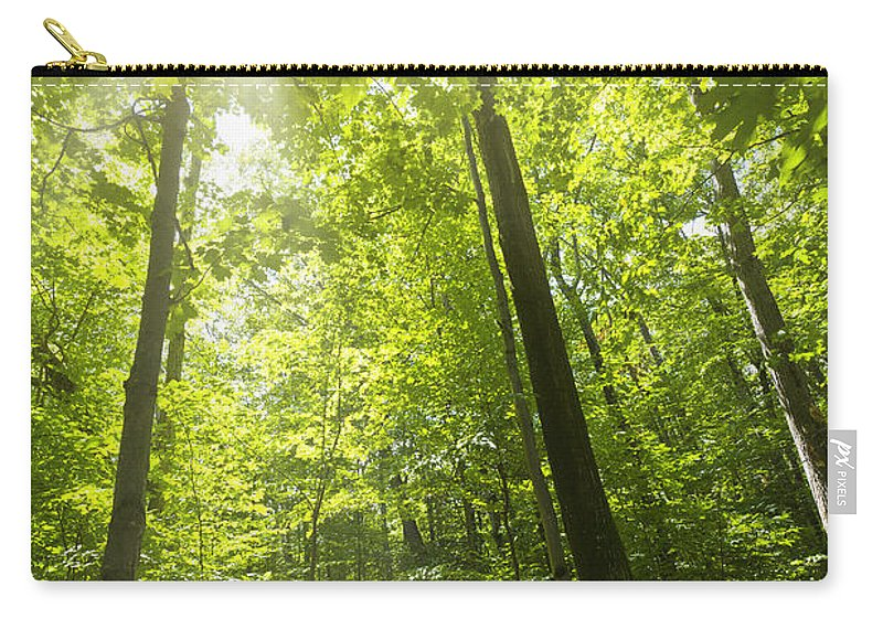 Trees Carry-all Pouch featuring the photograph Sunny Forest Path by Elena Elisseeva
