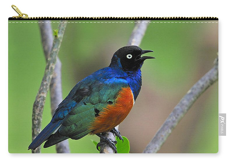 Superb Starling Carry-all Pouch featuring the photograph Superb Starling by Tony Beck