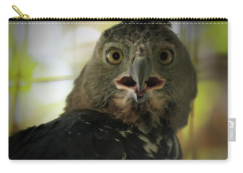 Eagle Carry-all Pouch featuring the photograph Surprized by Douglas Barnard