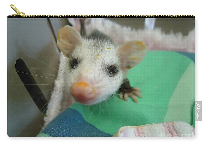 Opossum Carry-all Pouch featuring the photograph Sweet Pea by Art Dingo