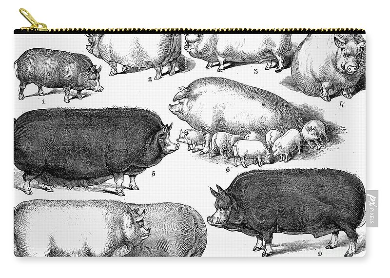 1876 Carry-all Pouch featuring the photograph Swine, 1876 by Granger