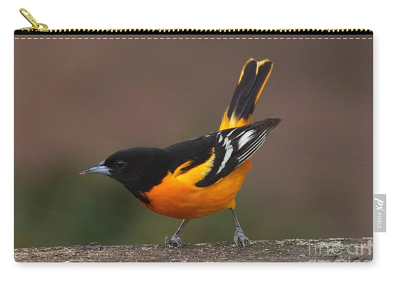 Oriole Carry-all Pouch featuring the photograph Take A Bow by Lori Tordsen