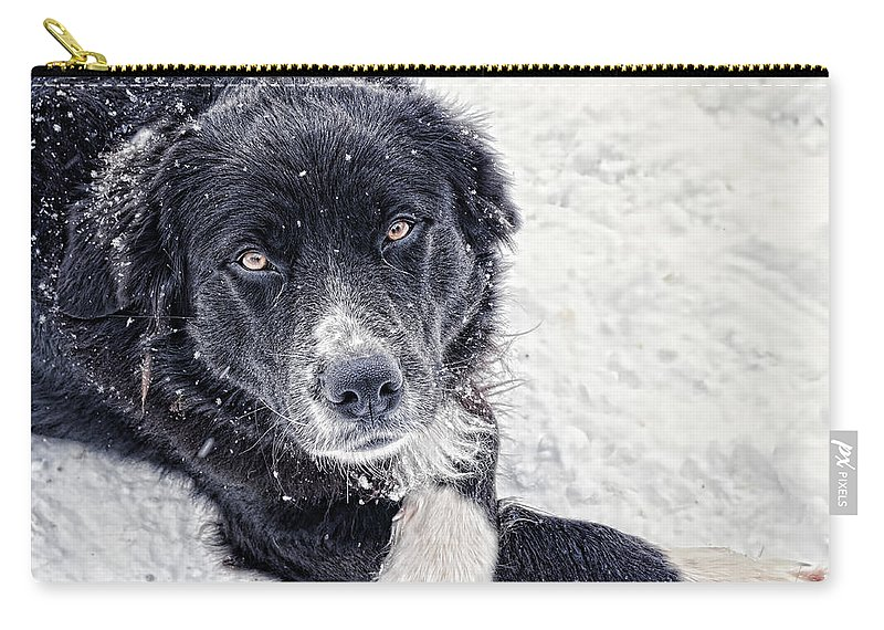 Dog Carry-all Pouch featuring the photograph Taking A Break by Gaby Swanson