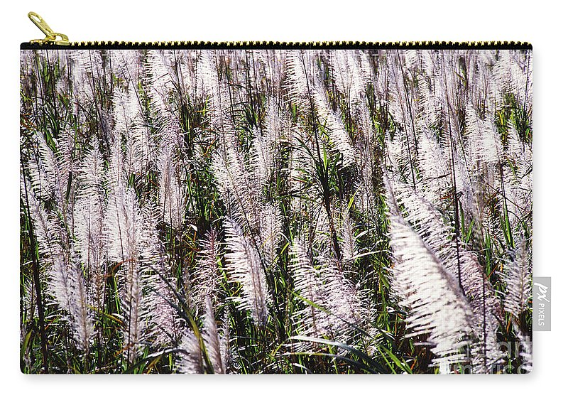 Sugar Carry-all Pouch featuring the photograph Tasseled Sugarcane by Photo Researchers