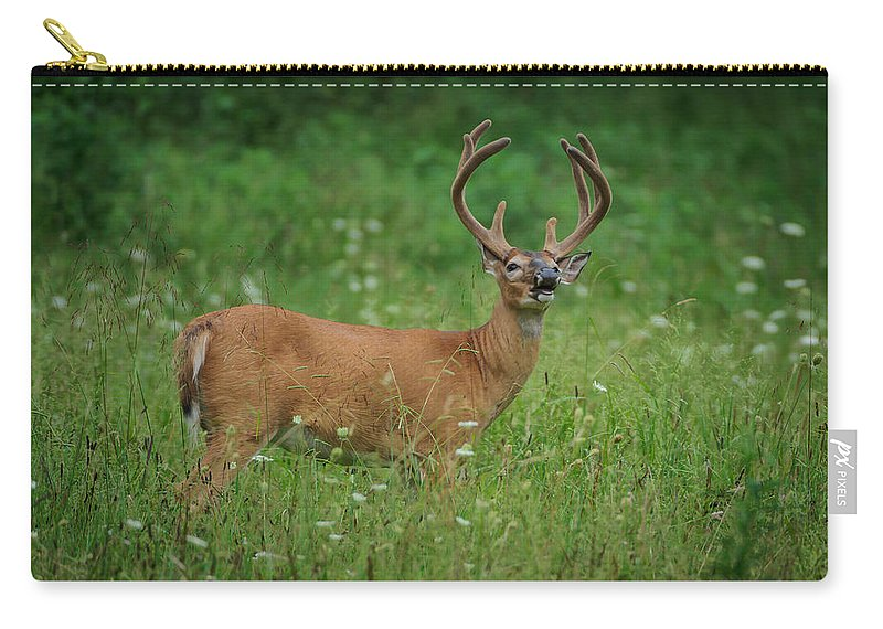 Cades Cove Carry-all Pouch featuring the photograph Testing The Evening Air by Charlie Choc
