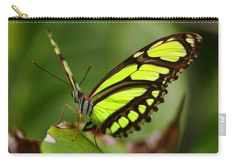 Beautiful Carry-all Pouch featuring the photograph The Beautiful Color Of A Malachi Butterfly by Bill Dodsworth
