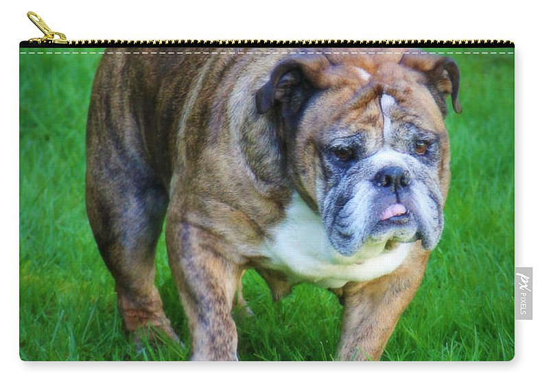 Bulldog Carry-all Pouch featuring the photograph The Bulldog Shuffle by Jeanette C Landstrom