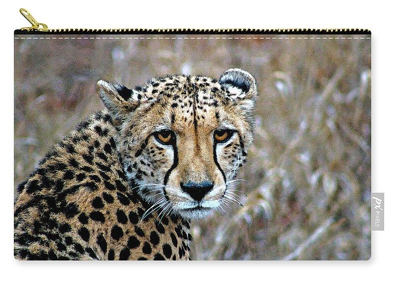 Acinonyx Carry-all Pouch featuring the photograph The Cheetah Stare by Paul Fell