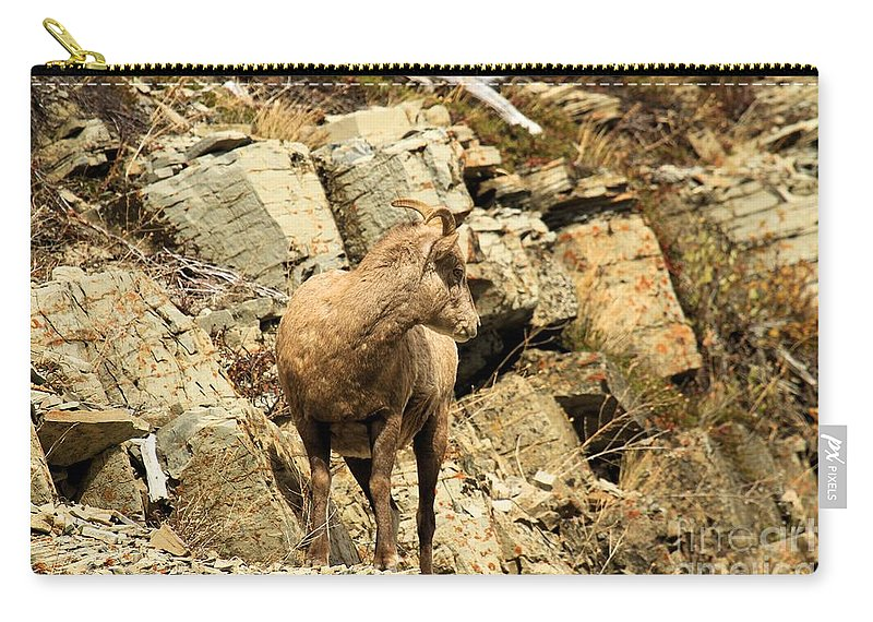 Big Horn Sheep Carry-all Pouch featuring the photograph The Lookout by Adam Jewell