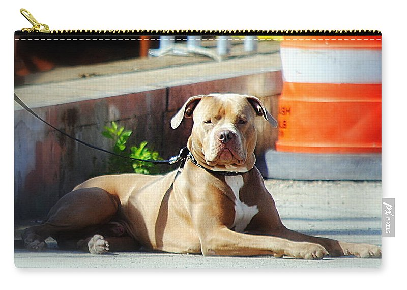 Pit Bull Carry-all Pouch featuring the photograph The Old Soul by Marysue Ryan