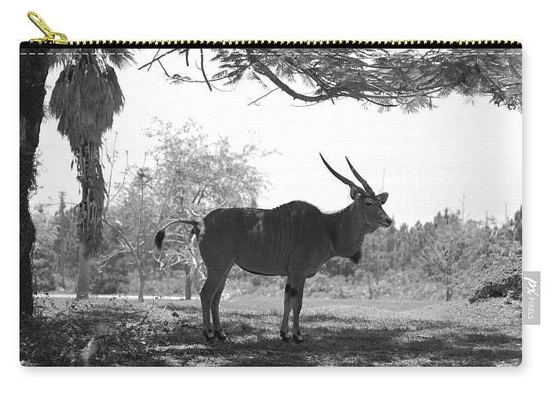 Animal Carry-all Pouch featuring the photograph The Post Card In Black And White by Rob Hans