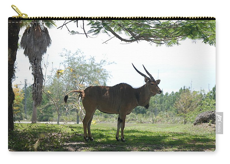 Animal Carry-all Pouch featuring the photograph The Postcard by Rob Hans