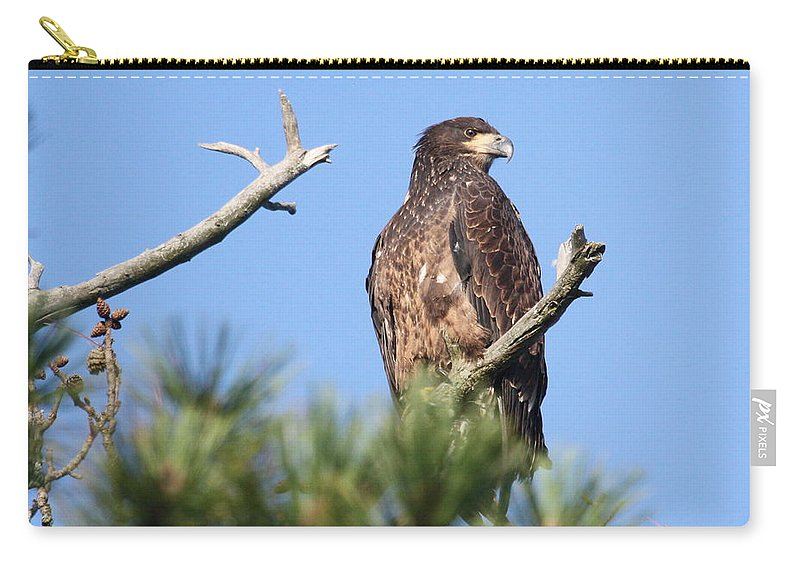 Bald Eagle Carry-all Pouch featuring the photograph The Princess by Teresa McGill