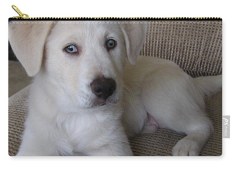Puppy Carry-all Pouch featuring the photograph The Puppy by Amy Hosp