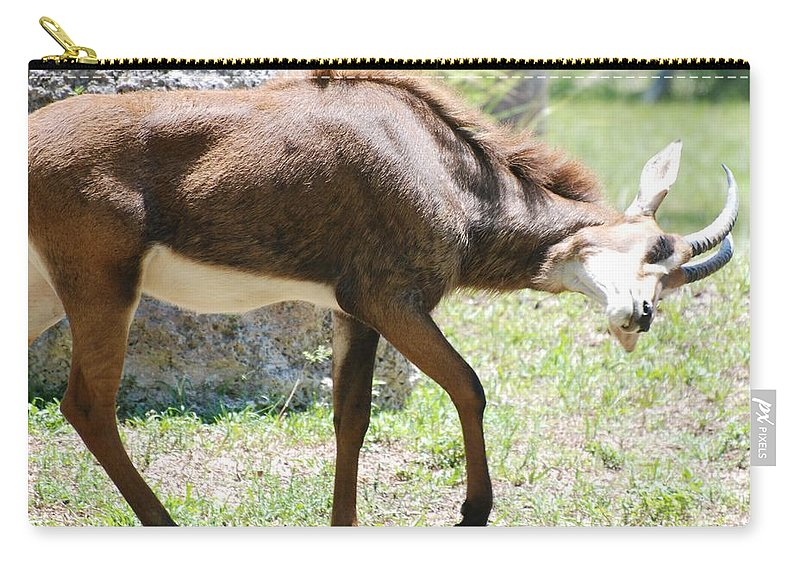 Animal Carry-all Pouch featuring the photograph The Stance by Rob Hans