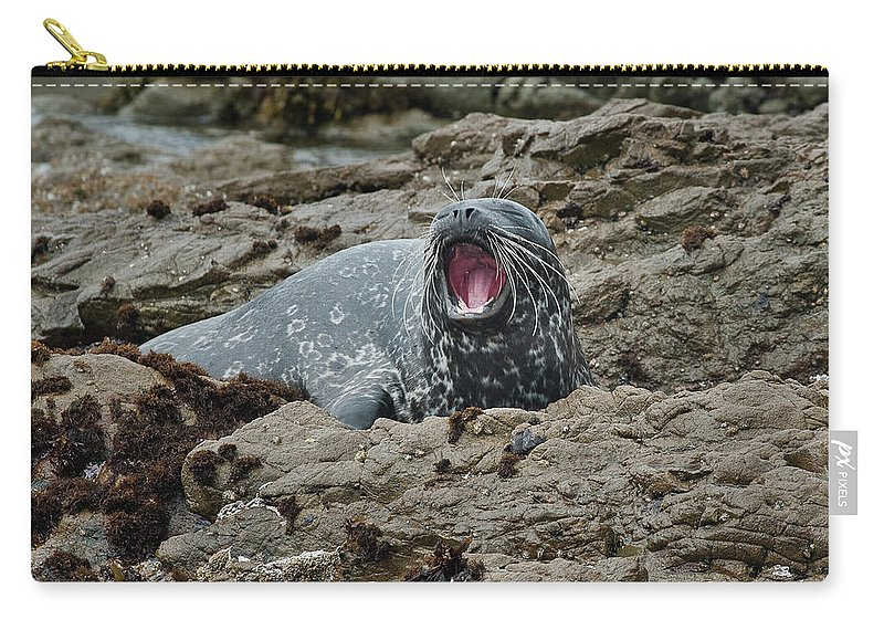Seal Carry-all Pouch featuring the photograph The Yawn by Greg Nyquist