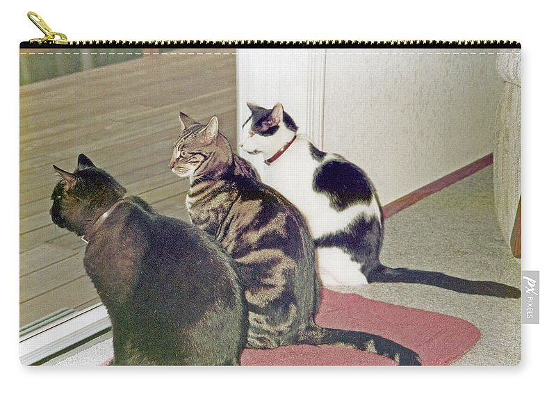Nature Carry-all Pouch featuring the photograph Three Cats Looking Out Into The Forest by Carl Deaville