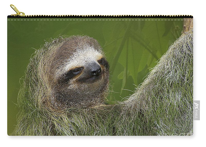 Sloth Carry-all Pouch featuring the photograph Three-toed Sloth by Heiko Koehrer-Wagner