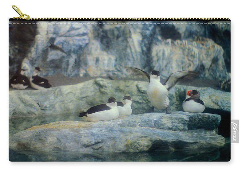 Antartic Carry-all Pouch featuring the photograph Time To Stretch by Mark Dodd