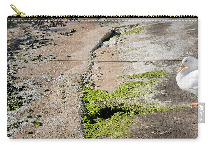 Sea Carry-all Pouch featuring the photograph to swim or not to swim - A beautiful white duck ready to get into the sea or not by Pedro Cardona Llambias