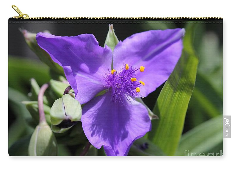 Tradescantia Carry-all Pouch featuring the photograph Tradescantia Named Andersonia Mauve by J McCombie