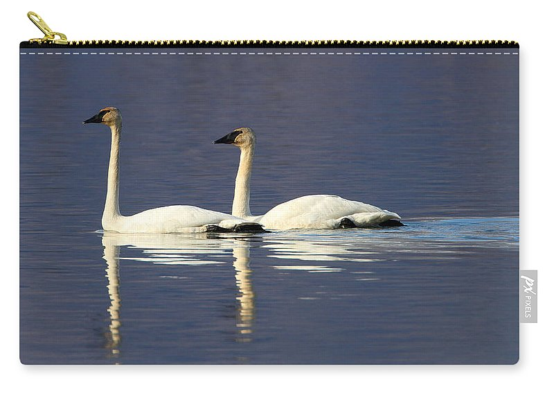 Doug Lloyd Carry-all Pouch featuring the photograph Trumpeter Swan Pair by Doug Lloyd