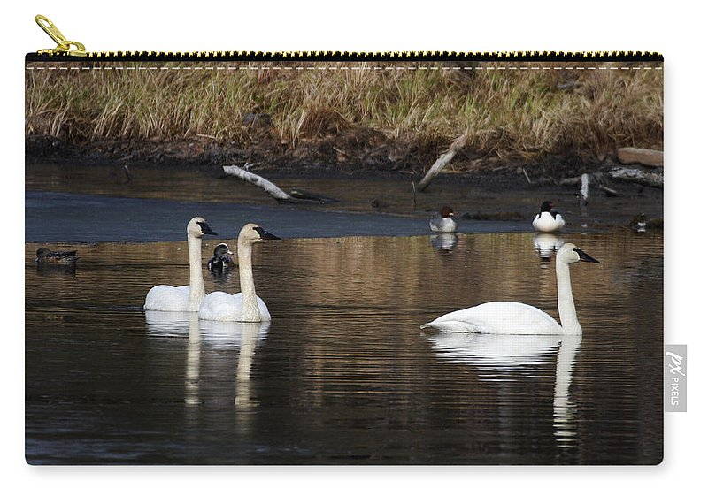 Alaska Carry-all Pouch featuring the photograph Trumpeter Swans by Doug Lloyd